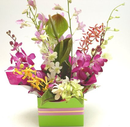 Send orchids to India Florists India Floral Blooms Gifts Roses Blossoms