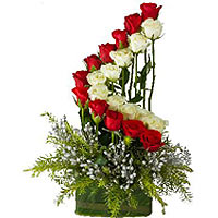 24 Red and white  Arrangement in row